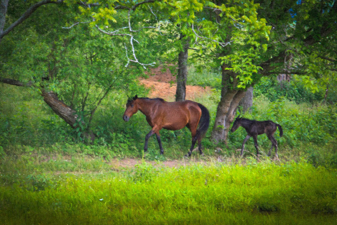 Terri-Aigner_Animals-Mare-and-Foal-in-WOods-oil-50-of-1-2