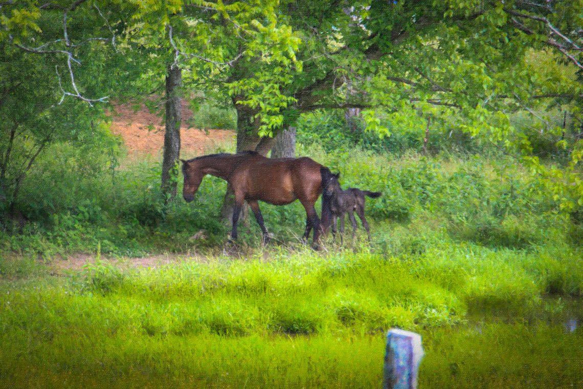 Terri-Aigner_Animals-Mare-and-Foal-in-WOods-oil-50-of-1