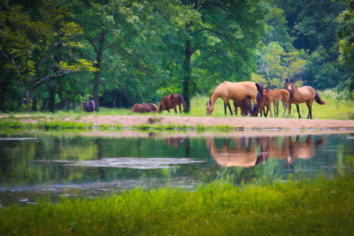 Terri-Aigner_Nature-Horses-Grazing-by-Pond-2-oil-50-of-1
