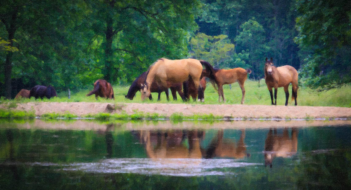 Terri-Aigner_Nature-Horses-Grazing-by-Pond-3-oil-50-of-1