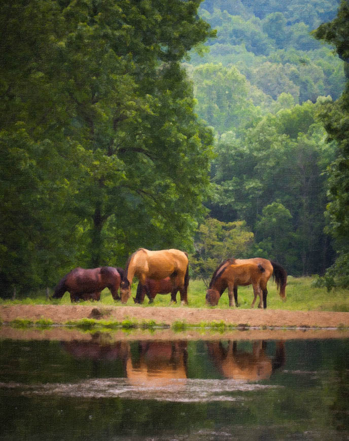 Terri-Aigner_Nature-Horses-Grazing-by-Pond-4-oil-50-of-1
