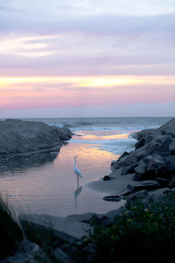 Terri-Aigner_Seascape-Egret-at-Dawn-50-of-1