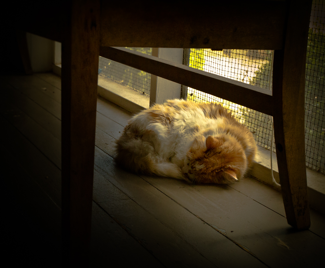 old-cat-sleeping-in-sunlight-on-porch-