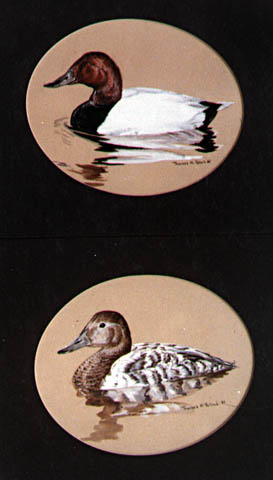 Canvasback-Pair
