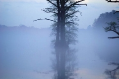 Terri-Aigner_Seascape-Chickahominy-Dawn-Mist-50-of-1-2