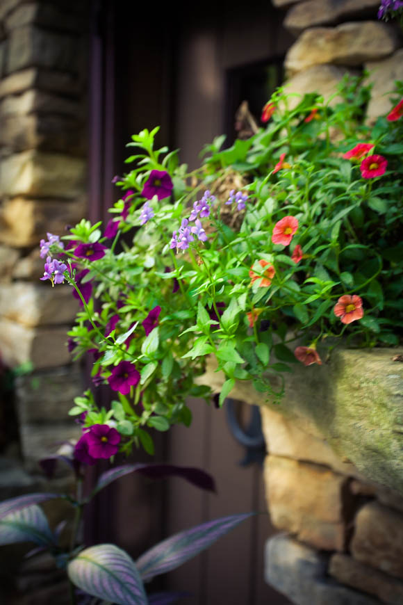 1_Terri-Aigner_Nature_Stone-Wall_and_FLowers_by_Purple_Doorframe-50-of-1