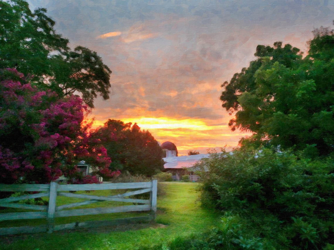 Terri-Aigner_Farm-Crepe-Myrtles-and-silos-in-Sunset-50-of-1