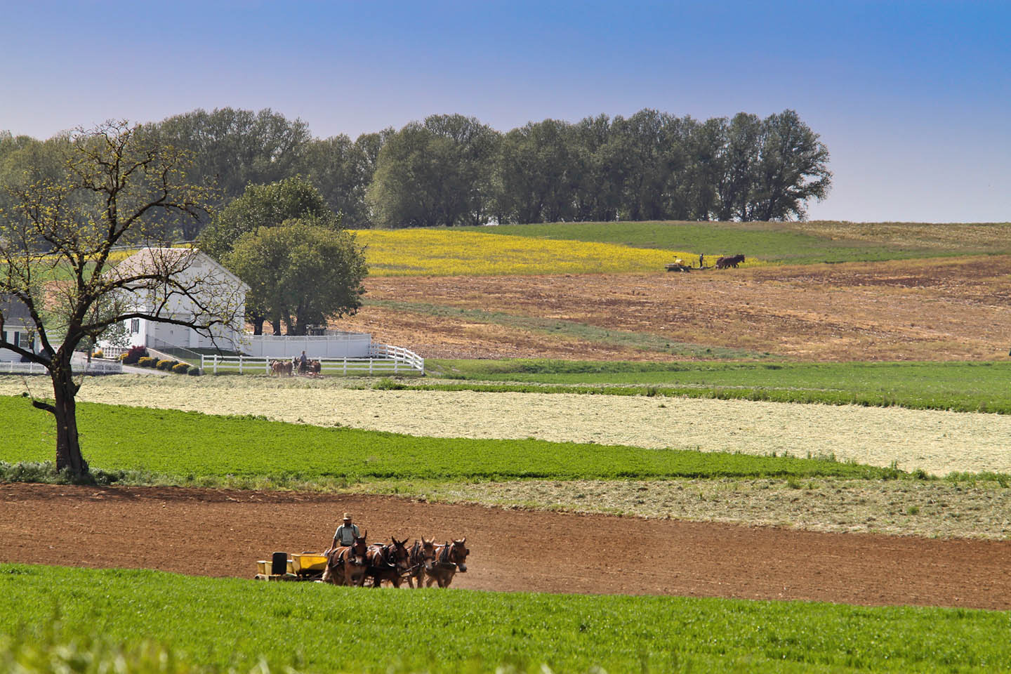 amish-country-farming-with-horses-etc-42-of-56