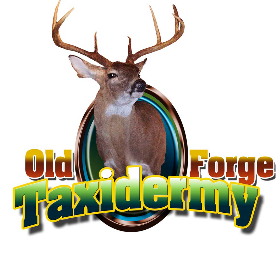 Old Forge Taxidermy Logo