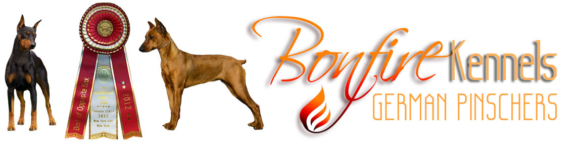 Bonfire Kennels Logo
