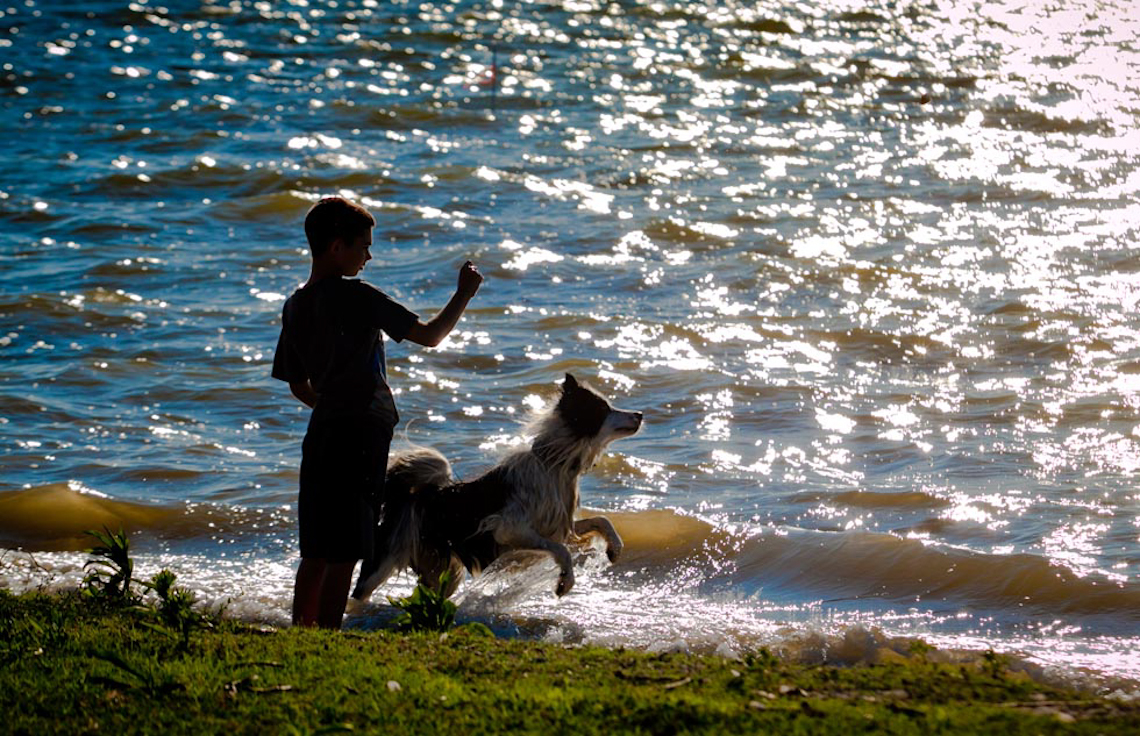Dog-playing-with-children-in-bay-4006