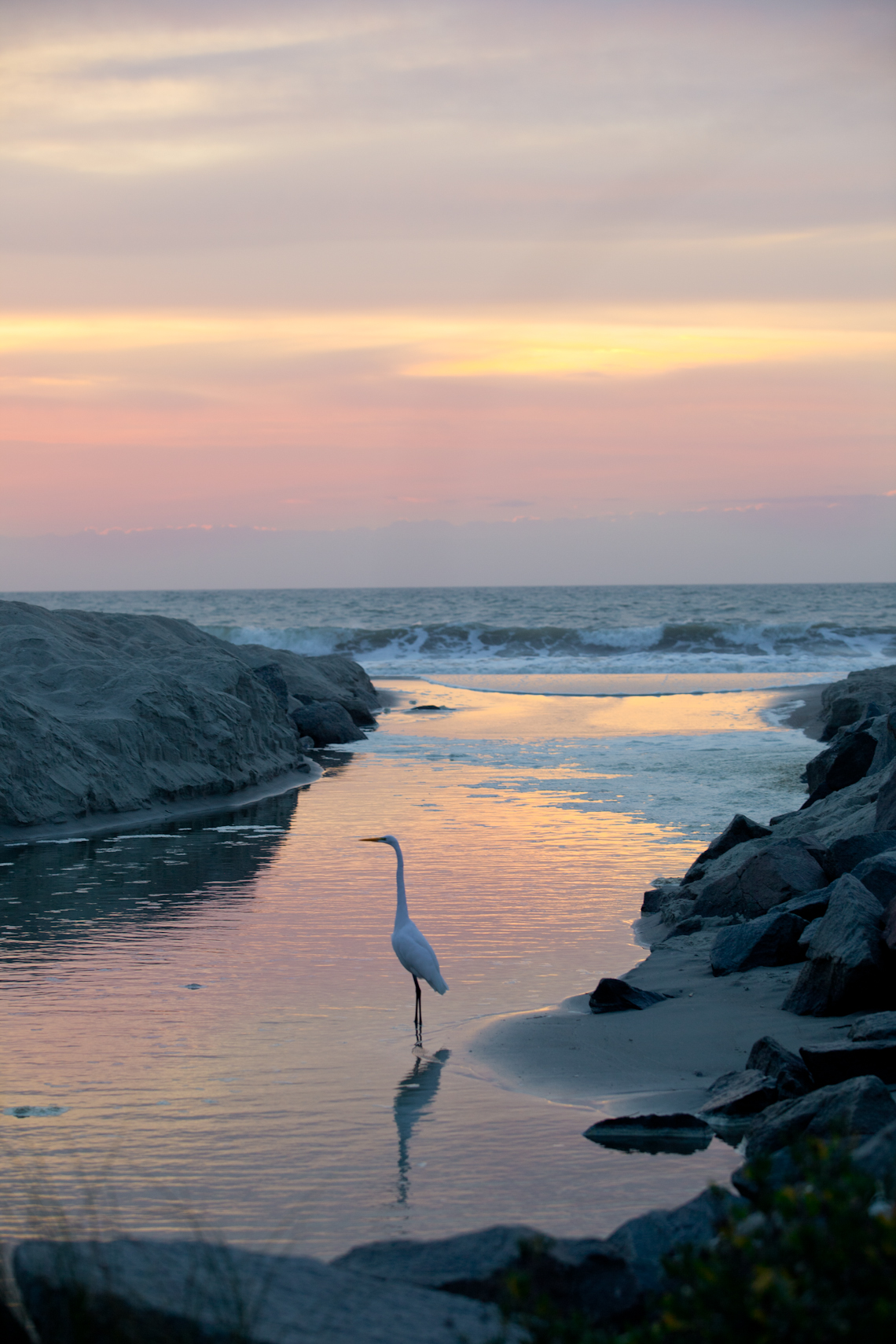 Egret-watches-over-myrtle-beach-dawn-terri-aigner