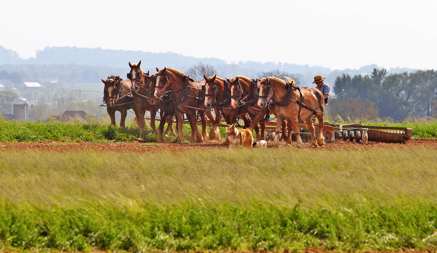 Farming_with_draft_Horses_Amish_by_Terri_Aigner