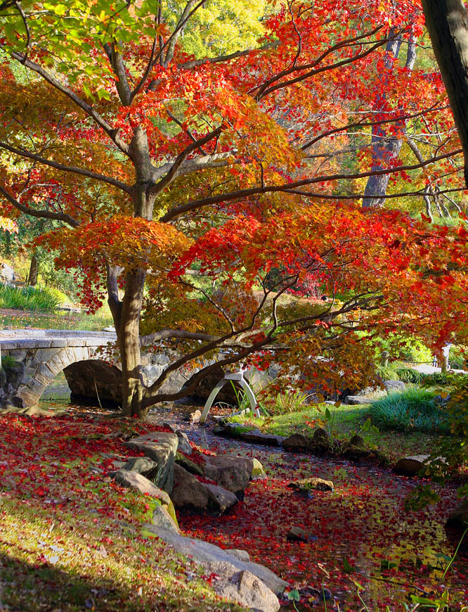Terri-Aigner_Nature_Japanese_Garden_Autumn_Maymont-50-of-1