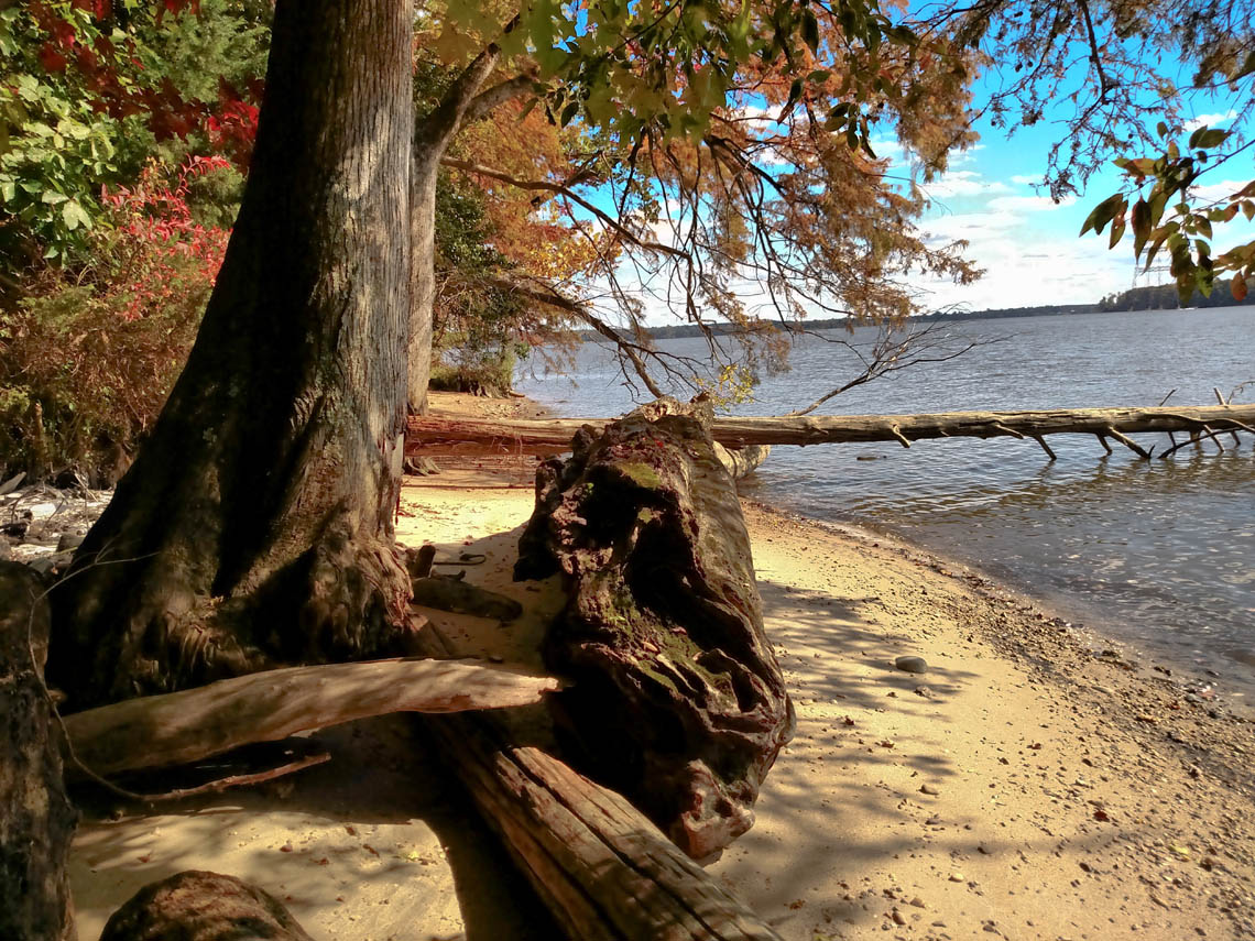Terri-Aigner_Still-Life-Seascape-Cypress-in-autumn-shoreline-50-of-1