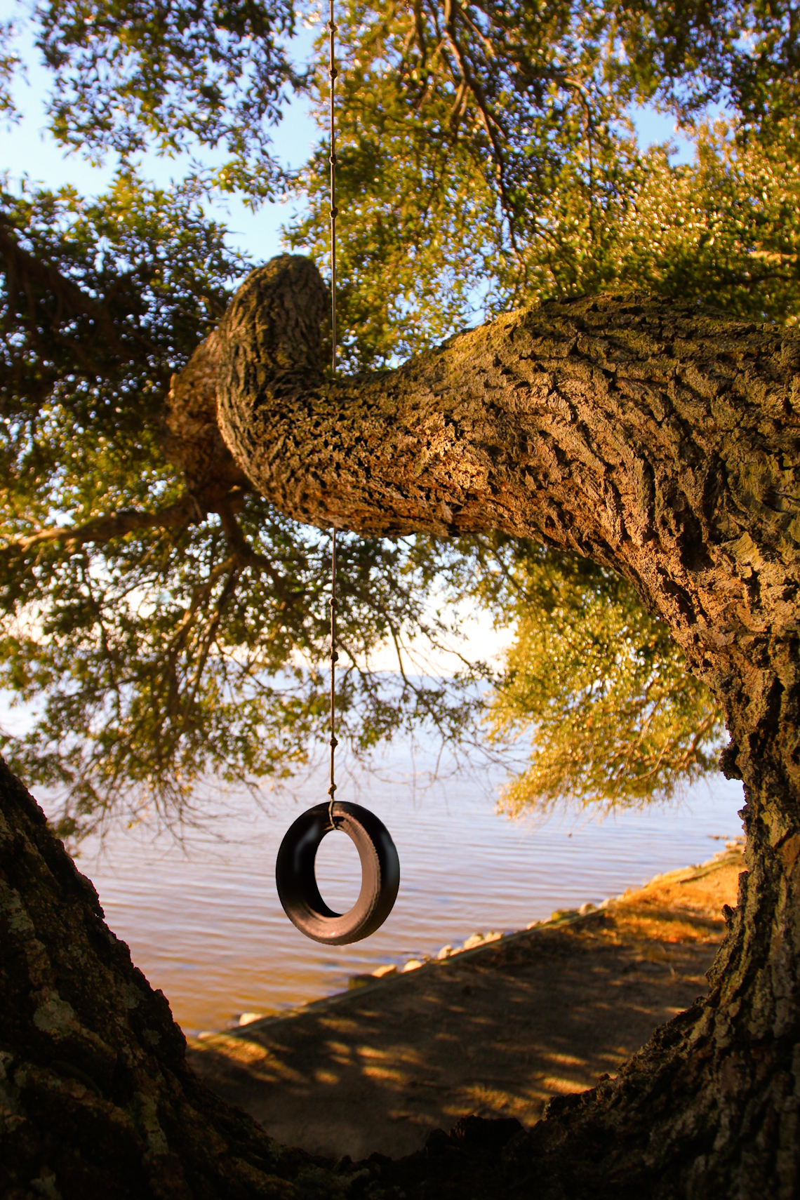 Tire-swing-from-old-live-oak