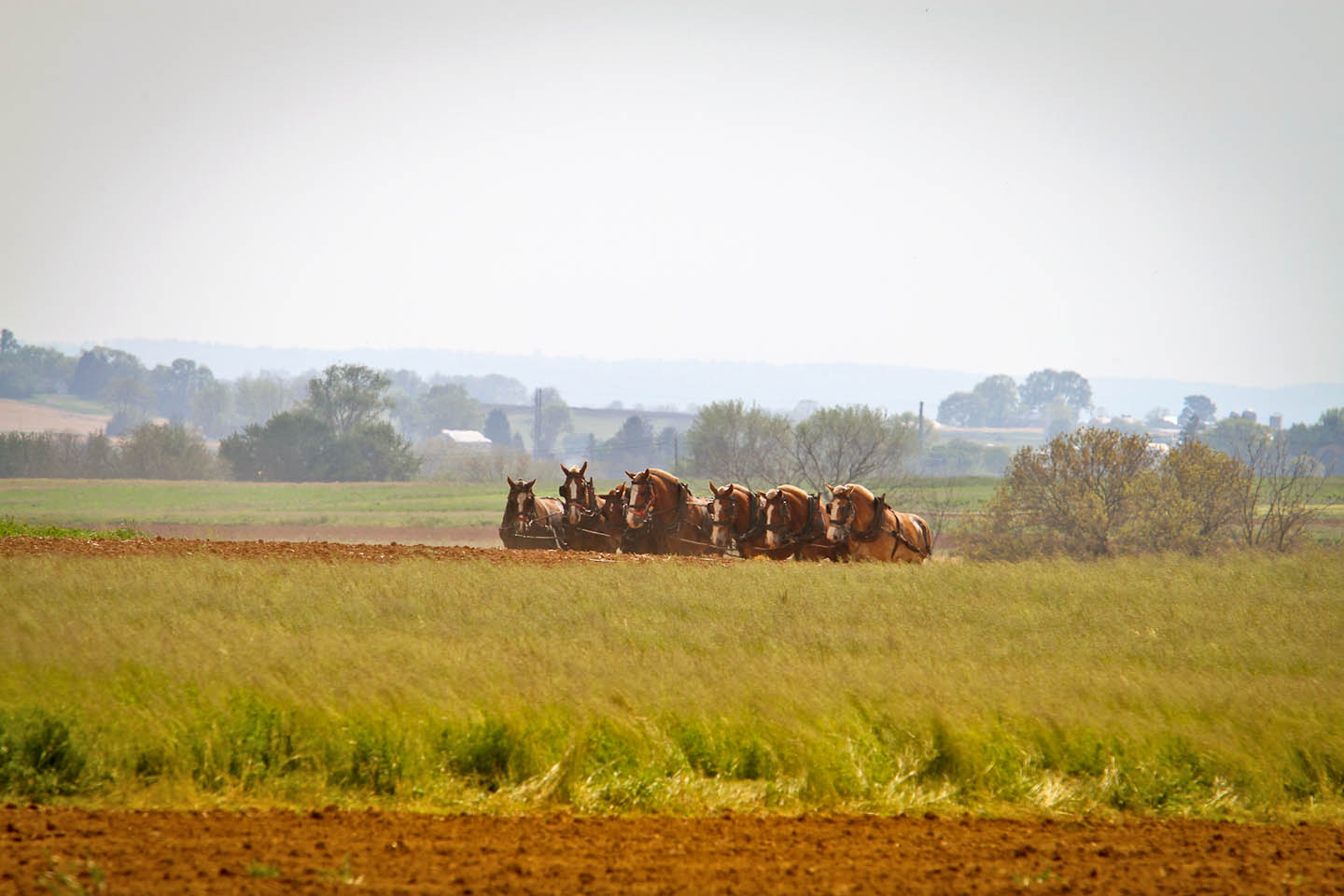 farming_with-Horses_by-Terri_Aigner