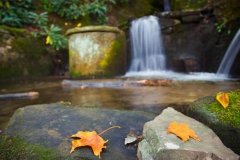 Terri-Aigner_Nature_Waterfall_and_Old_Stone_Spring-3-50-of-1